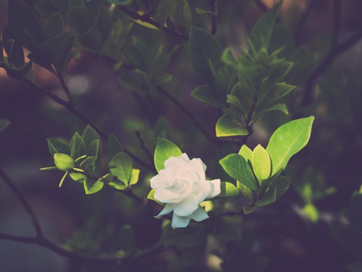 flower-good-lighting-1160613