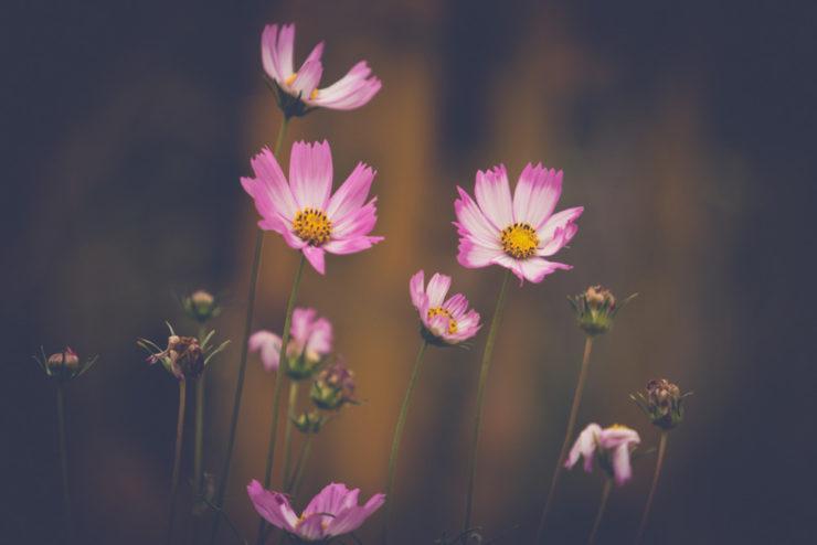 flower-matte-9852