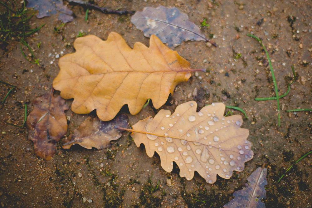 leaves-0533