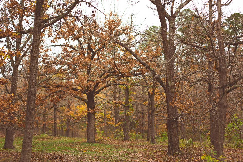 trees-0503